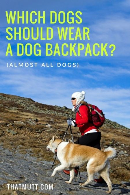Which dogs should wear a dog backpack? (Almost all dogs)