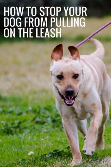 How to stop your dog from pulling on the leash