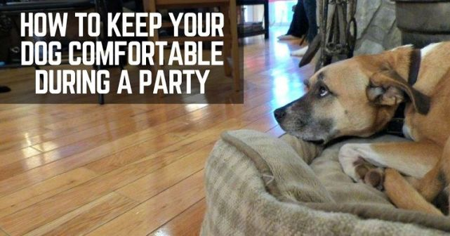 How to keep your Make your dog comfortable during a party
