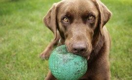 How to Increase Your Dog's Impulse Control – 5 Tips