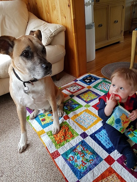 Tips on how to prepare your dog for a baby