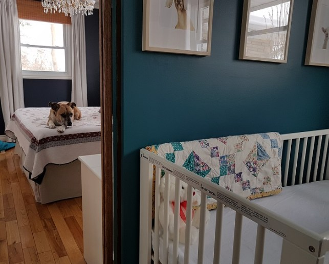 Dogs and babies - preparing your dog