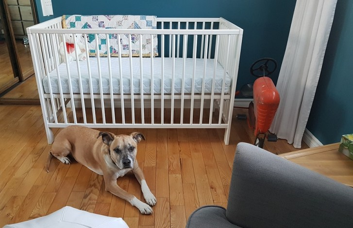 Dogs and babies, prepping your dog in advance