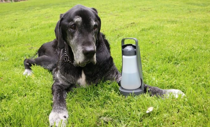 Portable dog food and water bowl