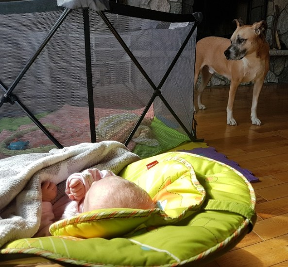 Safe spaces for your baby and your dog
