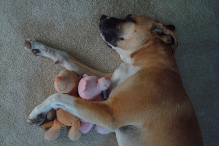 How to stop your dog from stealing baby toys