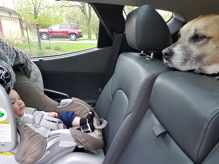 Car rides with your dog and baby