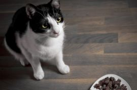 Which Food is Best for Cats? Canned or Dry?
