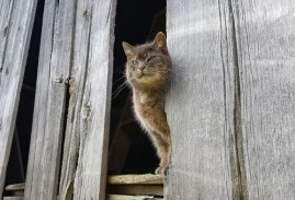 Caring for our Barn Cat, Ralph