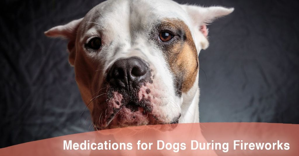 Medication for Dogs During Fireworks and When to Use It