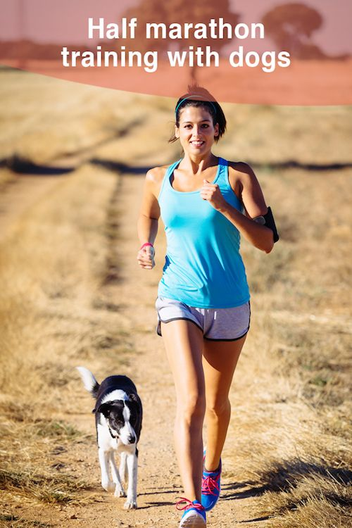 Training for a half marathon with your dog