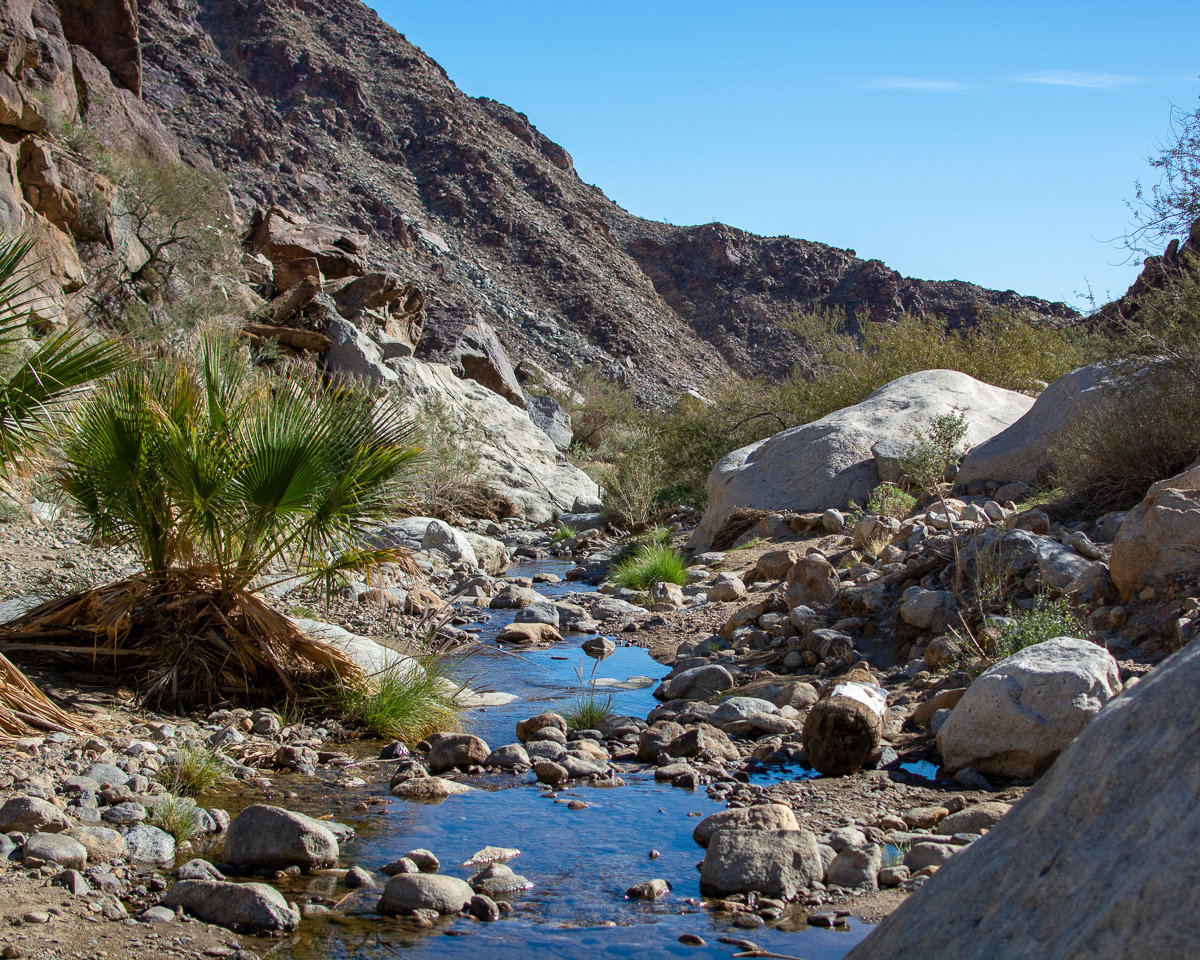 Borrego Palm Canyon Trail in Anza-Borrego Desert State Park