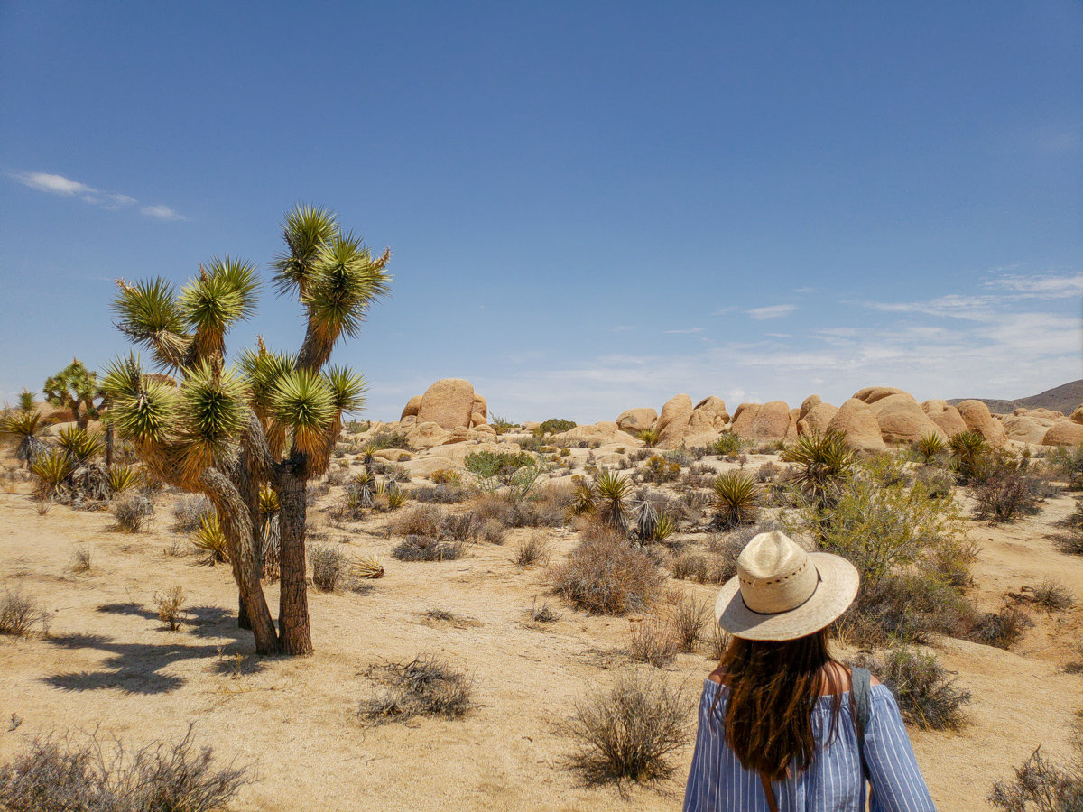 Walking through Joshua Tree National Park