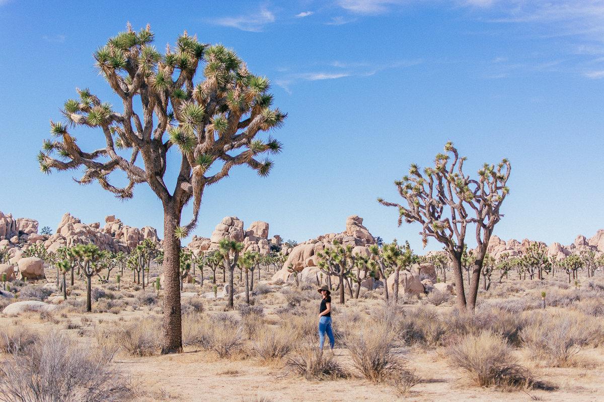 10 Tips For Visiting Joshua Tree National Park That Oc Girl