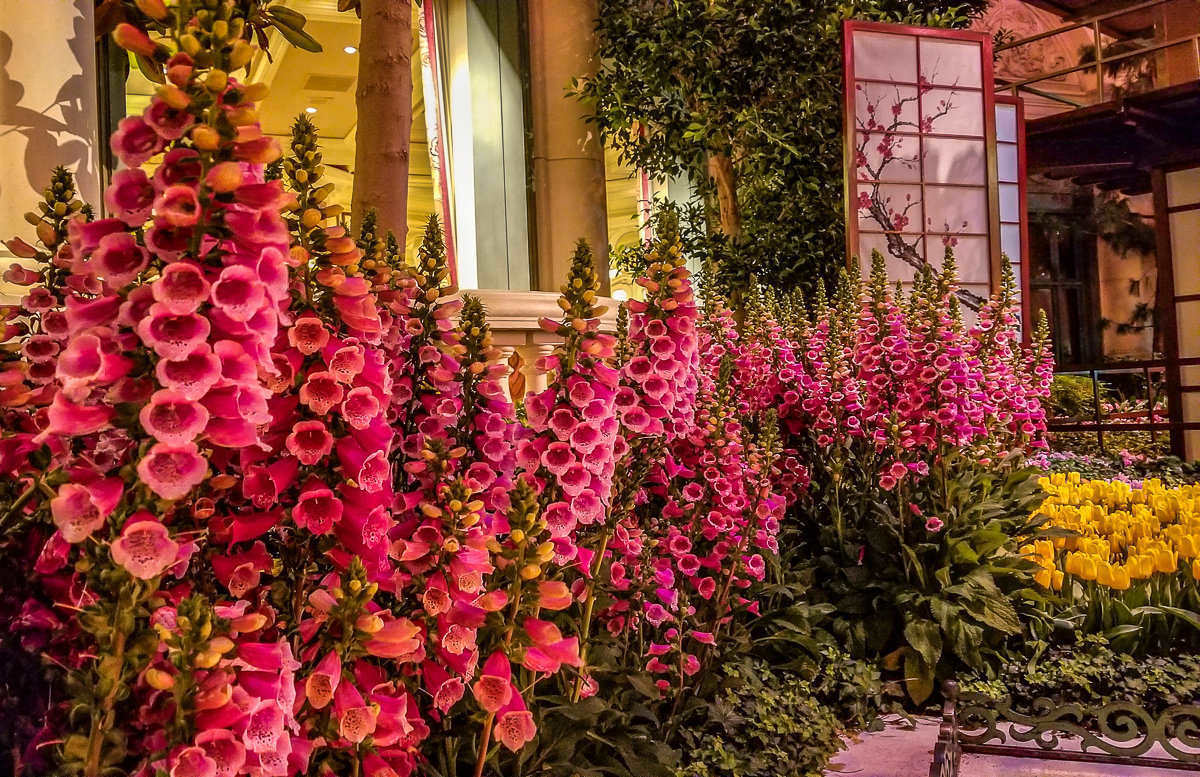 Bellagio Botanical Gardens