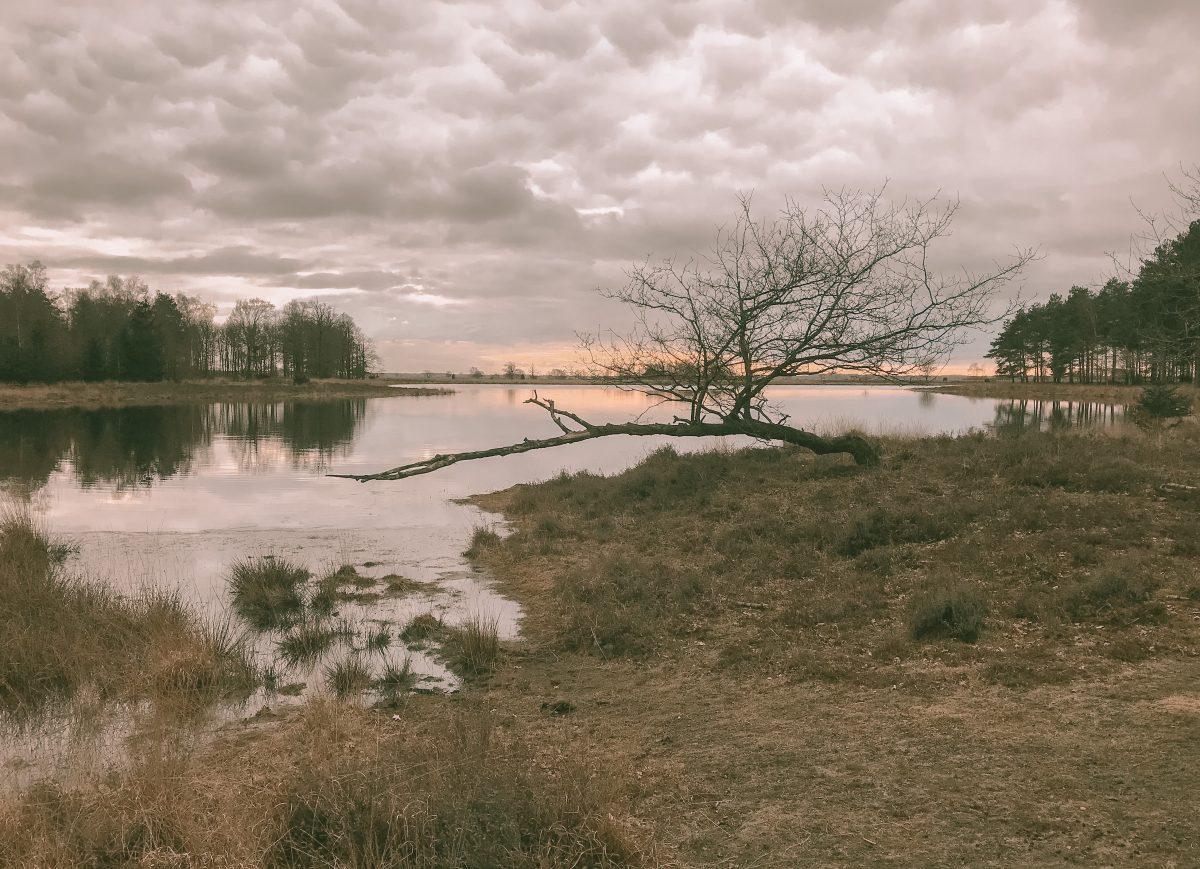 Nationaal Park Dwingelderveld 3- maart 2021