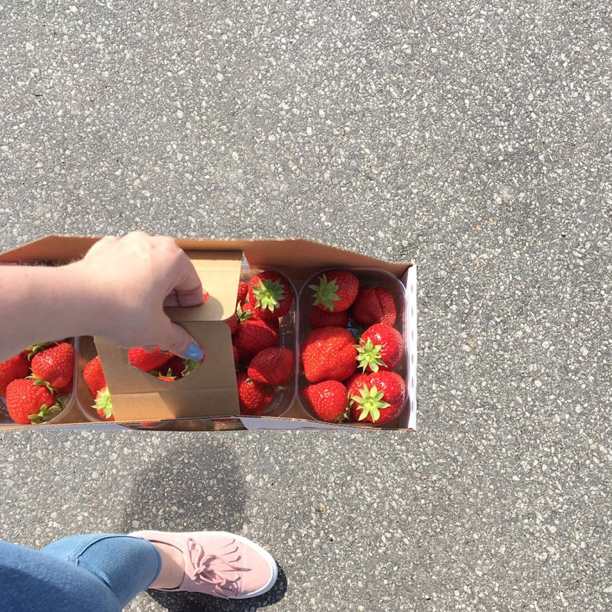 norwegian_summer_moments_strawberries