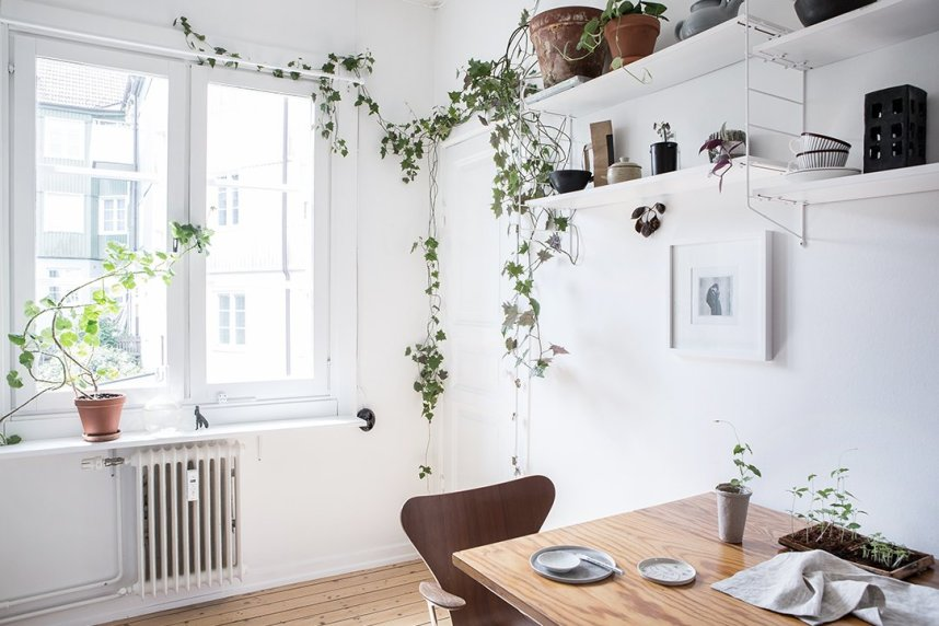 scandinavian_home_interior_plants_1