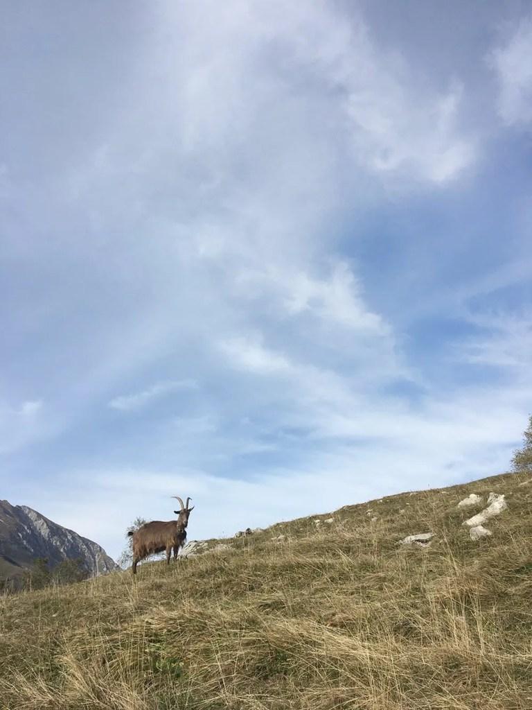 scandinavian_feeling_in_italy_hiking_goat_landscape