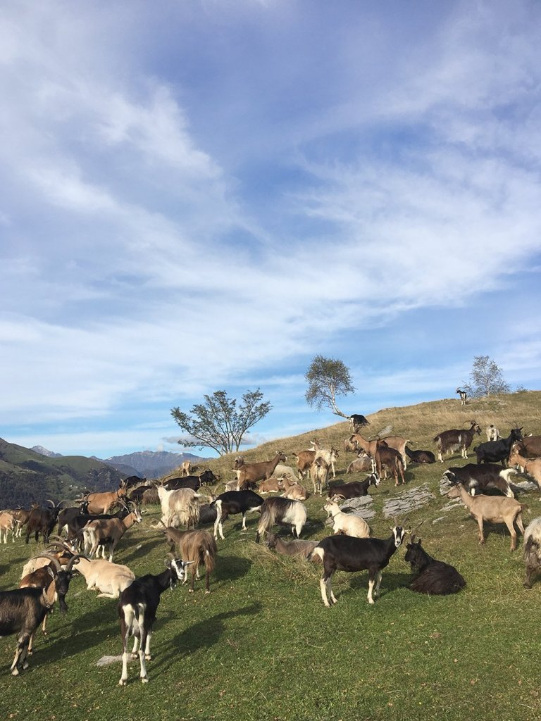scandinavian_feeling_in_italy_hiking_goats