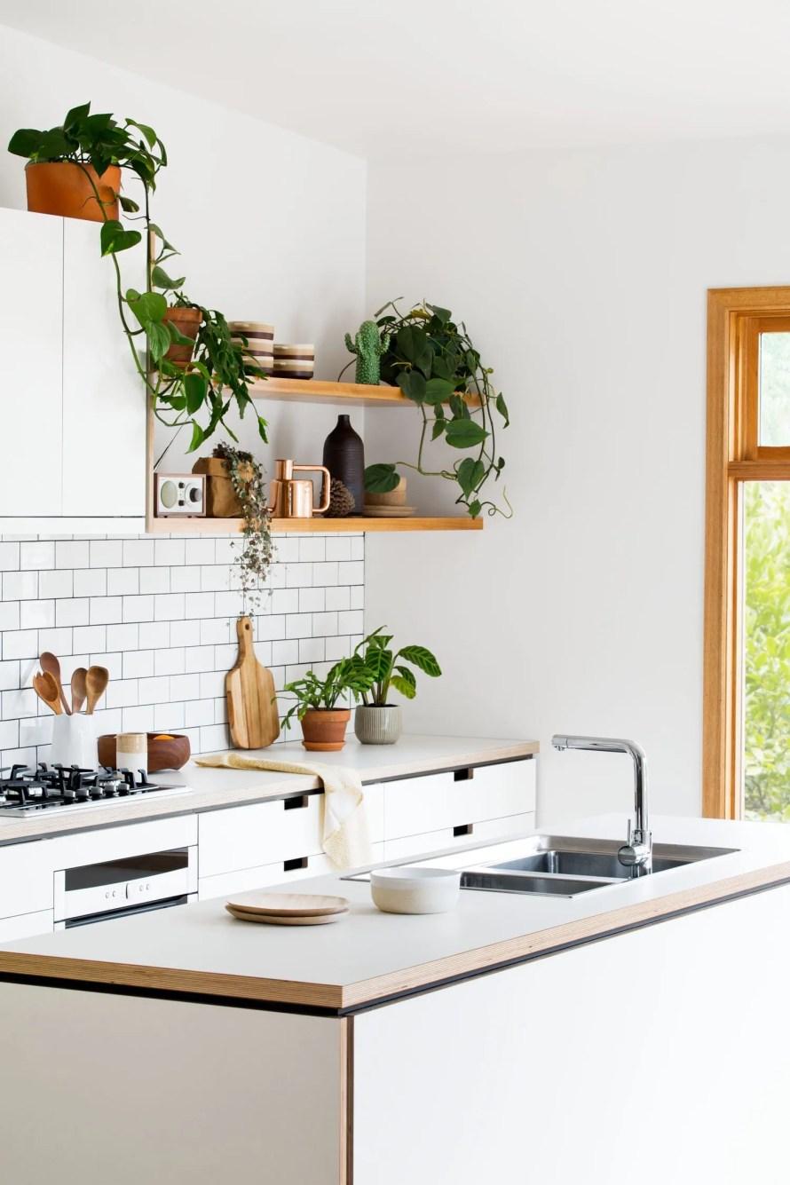 cantilever cozy plants kitchen green