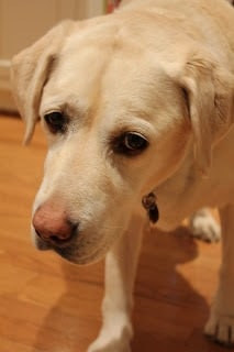 Innocent face of dog in kitchen