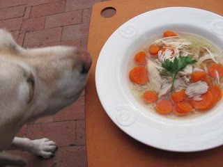 Lambeau sniffing Homemae Chicken Soup with Matzo Balls