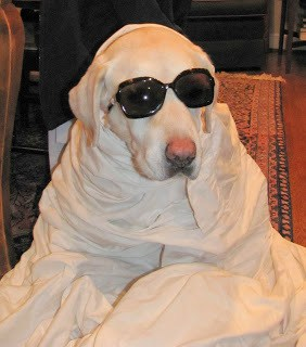 A dog dressed up in glasses and a sheet