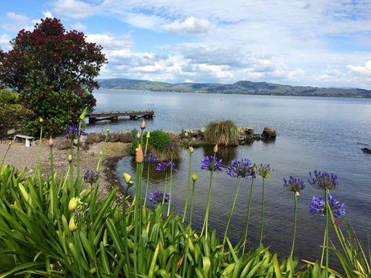 Rotorua View