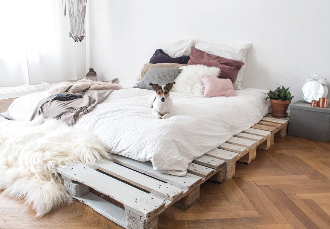 Hund auf einem selbstgebauten Palettenbett