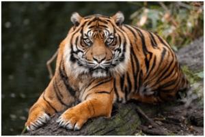 Tiger | Bear | Top 10 strongest animals