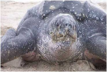 turtle - Top 10 animals being killed by poachers