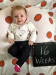 marlowe 16 weeks