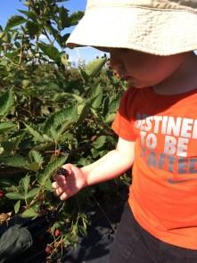 jenson blackberries