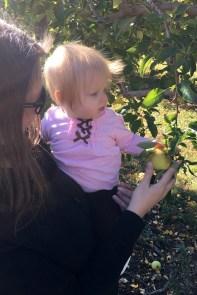 apples 2016