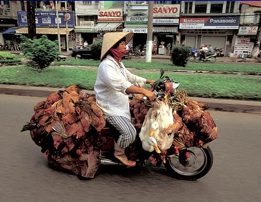 How to transport chicken