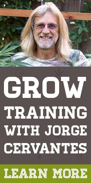Grow Training with Jorge Cervantes