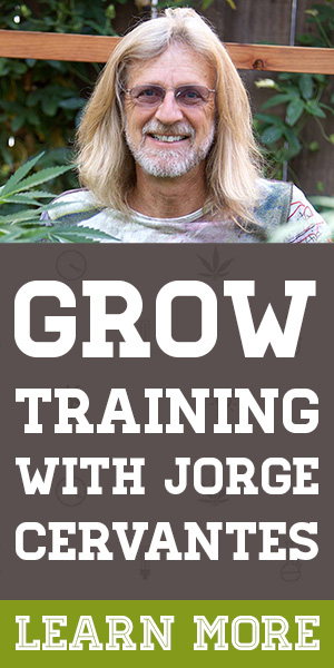 Grow Training with Jorge Cervantes