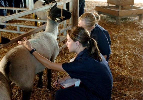students-Goat-checkup