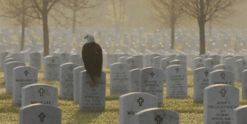 Eagle on gravestone