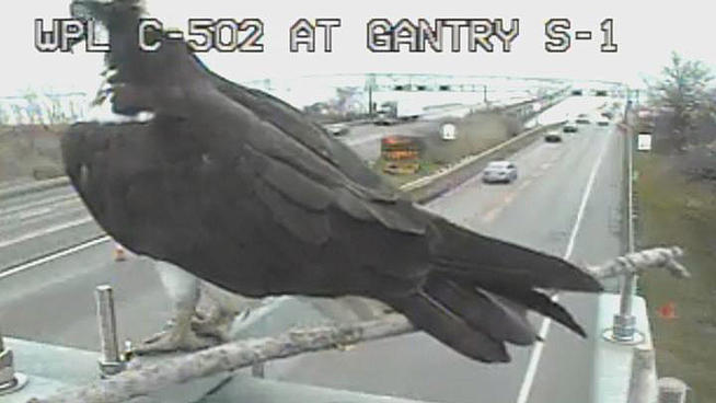 Will this Osprey get a ticket from O'Malley for parking in a thru lane?