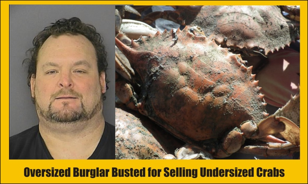 Harvey McKenzie Jr busted for selling undersized crabs