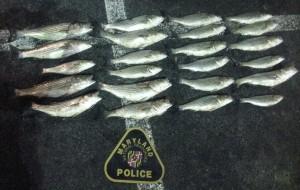 Illegally caught rockfish