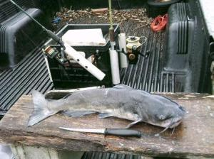 Catfish cleaning platform. THE CHESAPEAKE TODAY photo by Cap'n Larry Jarboe