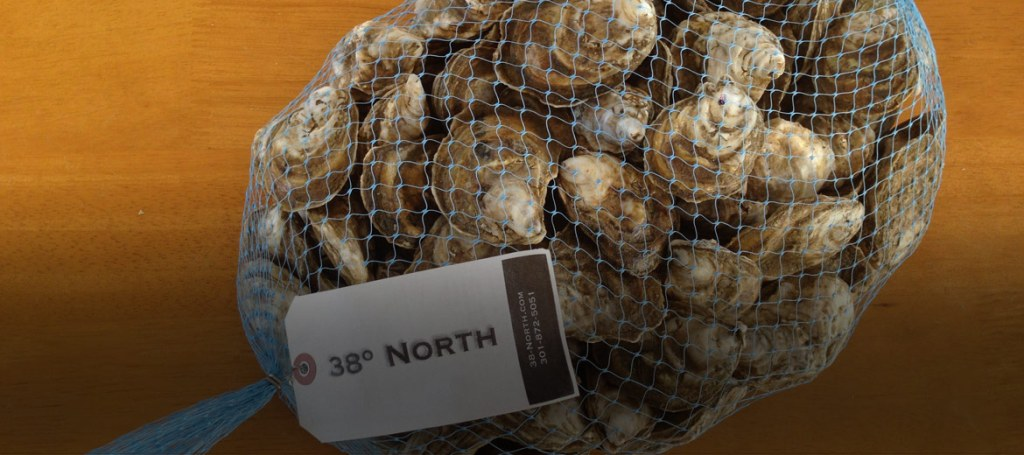 Oyster bag from 38 degree North