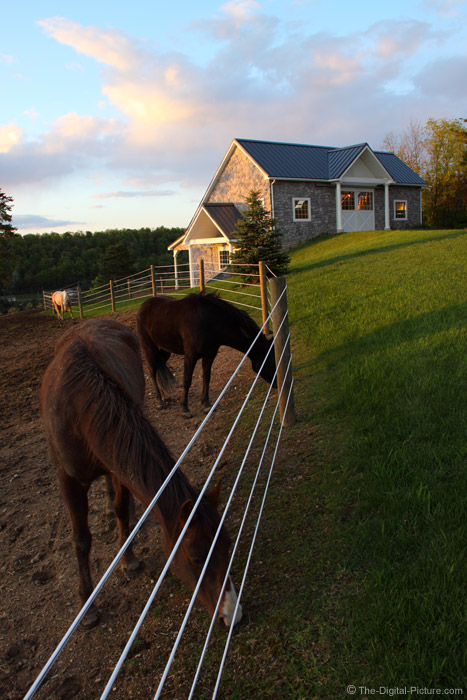 Fence Horses And A Barn