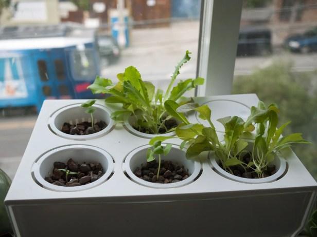 Grow Cups