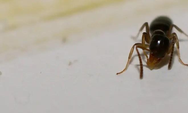 Get Rid of Ants Overnight