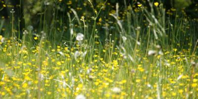 reduce allergies