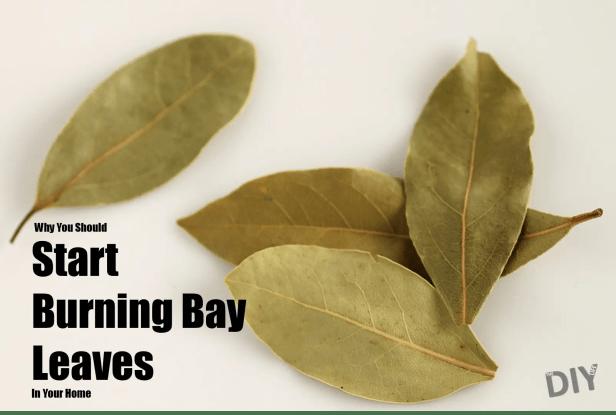 start-burning-bay-leaves-pinterest